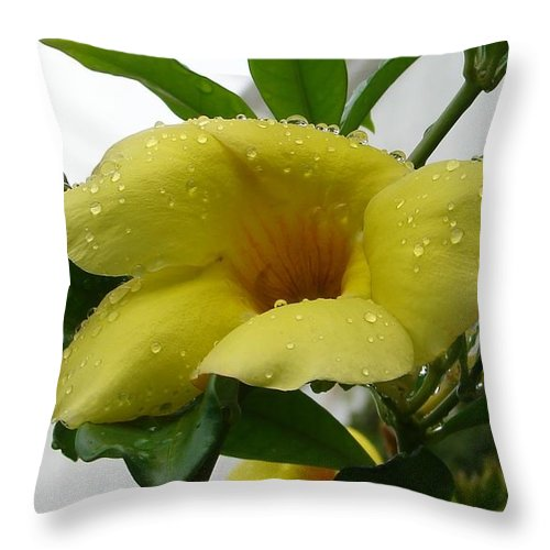 Yellow Water Drops Flower Green Leaves Throw Pillow featuring the photograph Copa De Oro by Luciana Seymour
