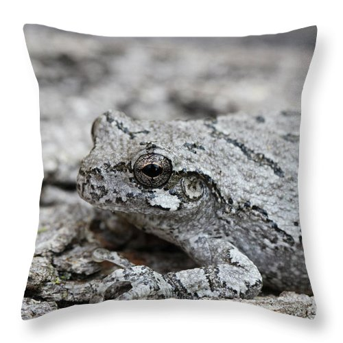 Frog Throw Pillow featuring the photograph Cope's Gray Tree Frog #5 by Judy Whitton