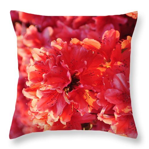 Floral Throw Pillow featuring the photograph Coral Pink Azaleas by Jan Amiss Photography