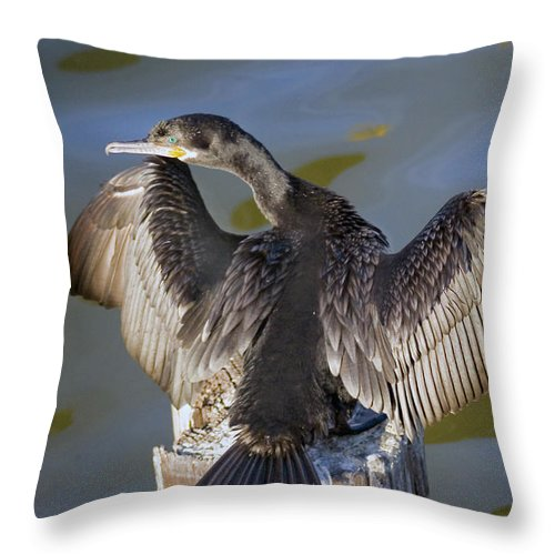 Neotropic Cormorant Throw Pillow featuring the photograph Cormorant looking back by Robert Brown