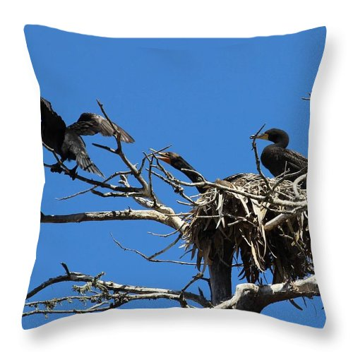 Cormorant Throw Pillow featuring the photograph Cormorant Teenager In Nest Begging For Food by Gary Canant