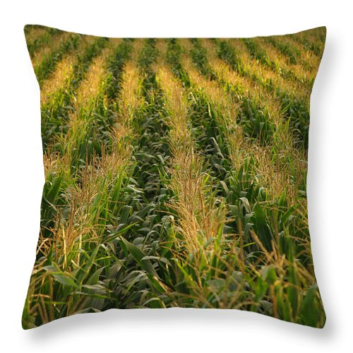 Acores Throw Pillow featuring the photograph Corn Field by Gaspar Avila