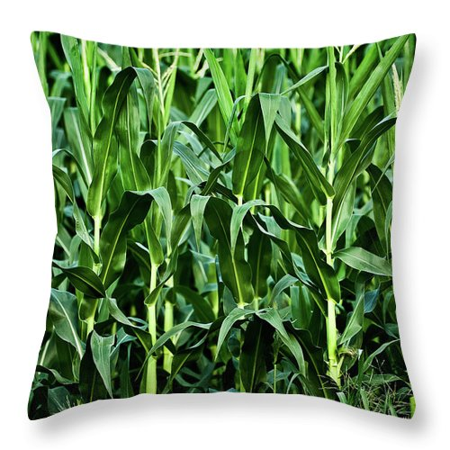 Corn Throw Pillow featuring the photograph Corn Field's First Row by Onyonet Photo Studios