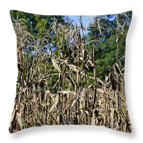 Corn Throw Pillow featuring the photograph Corn Stalks Drying by Teresa Mucha