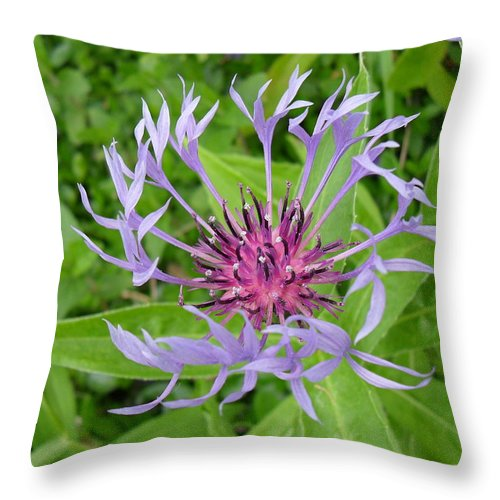 Cornflower Throw Pillow featuring the photograph Cornflower by Peggy King