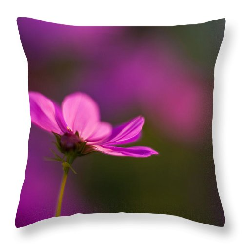 Cosmo Throw Pillow featuring the photograph Cosmo Impression by Mike Reid