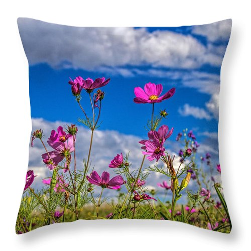 Botanical Throw Pillow featuring the photograph Cosmos Sky by Alana Thrower