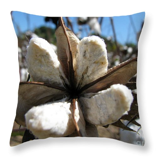 Cotton Throw Pillow featuring the photograph Cotton by Amanda Barcon