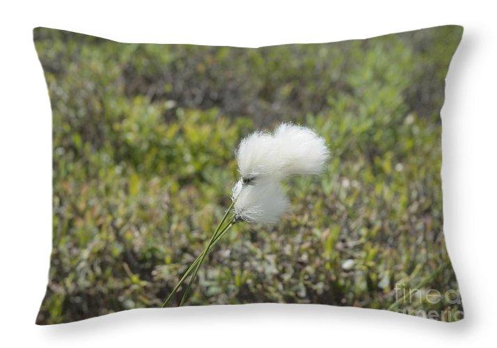 New England Throw Pillow featuring the photograph Cotton Grass -eriophorum Virginicum- by Erin Paul Donovan