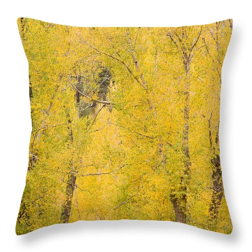 Yellow Throw Pillow featuring the photograph Cottonwood Autumn Colors by James BO Insogna