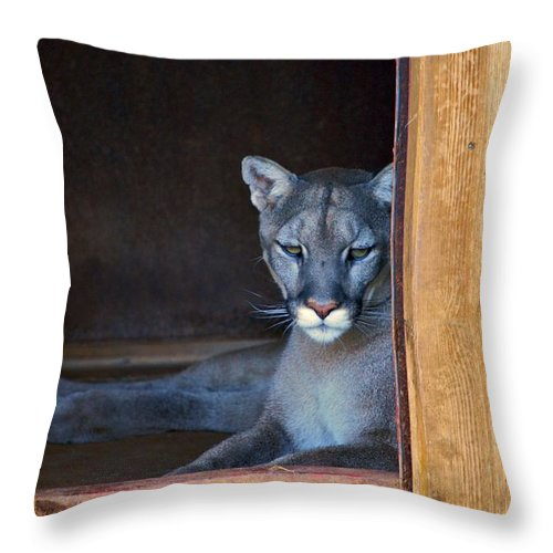 Cougars Throw Pillow featuring the photograph Cougar by Donna Shahan