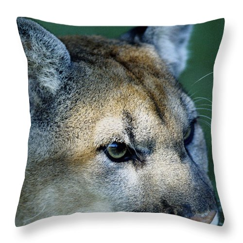 Cougar Throw Pillow featuring the photograph Cougar by Steve Somerville