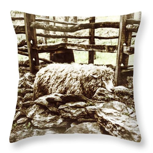 Sheep Throw Pillow featuring the photograph Counting Sheep by JAMART Photography