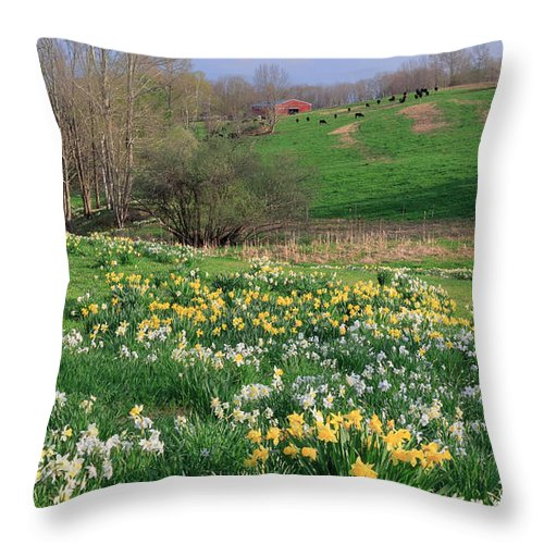 Grazing Cows Throw Pillow featuring the photograph Country Spring by Bill Wakeley