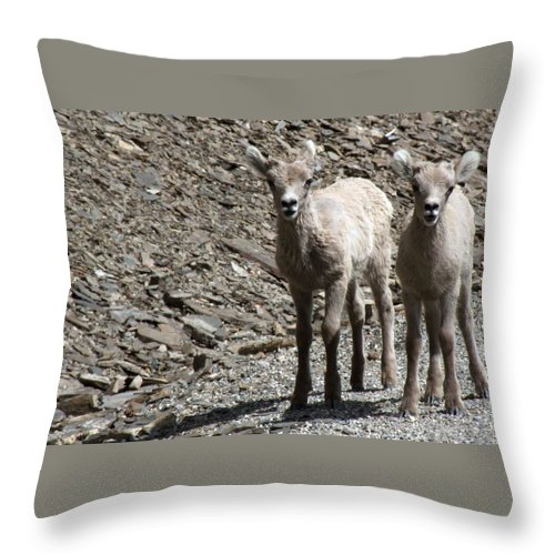 Baby Throw Pillow featuring the photograph Couple Of Cuties- Baby Bighorn by Tiffany Vest