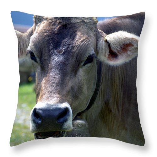 Cow Throw Pillow featuring the photograph Cow by Flavia Westerwelle