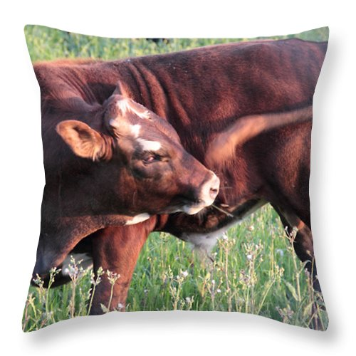 Animals Throw Pillow featuring the photograph Cow Lathrop California by Paul Shefferly