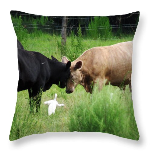 Animal Throw Pillow featuring the photograph Cow Playing Head Games by Mario Carta