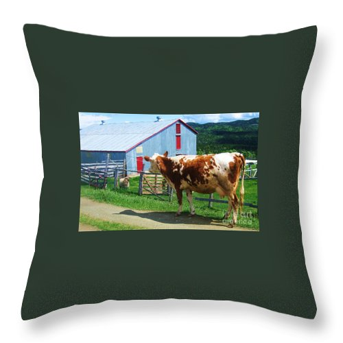 Photograph Cow Sheep Barn Field Newfoundland Throw Pillow featuring the photograph Cow Sheep And Bicycle by Seon-Jeong Kim