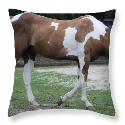 Horse Throw Pillow featuring the photograph Cow Spotted Horse by Rob Hans