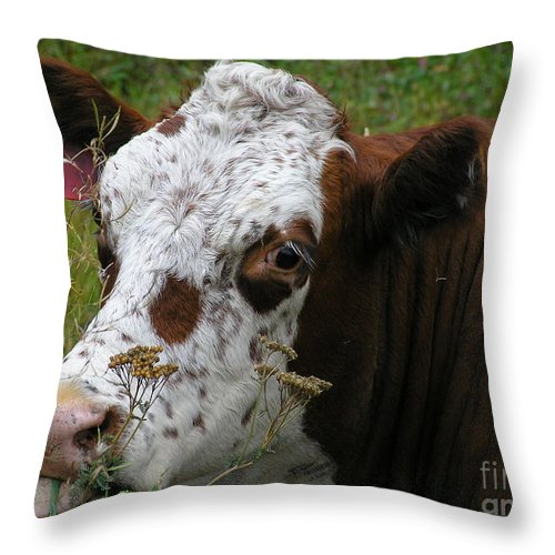 Tongue Throw Pillow featuring the photograph Cow Tongue by Louise Magno