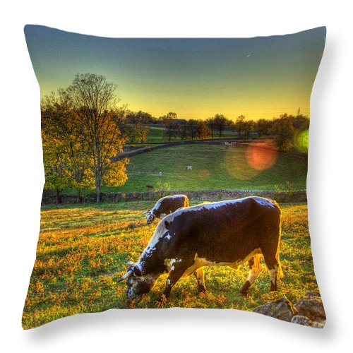 Shaker Throw Pillow featuring the photograph Cows And Stone Fences by Sam Davis Johnson
