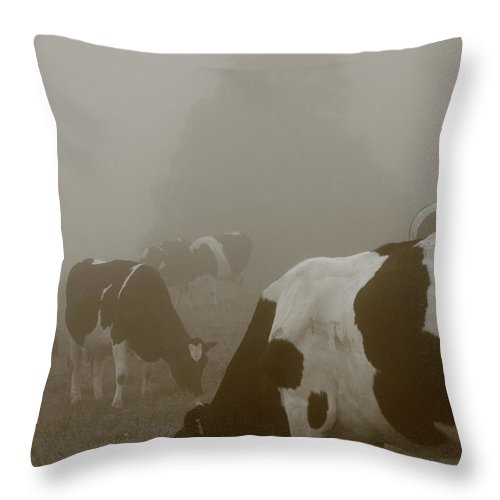 Animals Throw Pillow featuring the photograph Cows In The Mist by Gaspar Avila