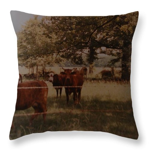 Cows Throw Pillow featuring the photograph Cows by Rob Hans