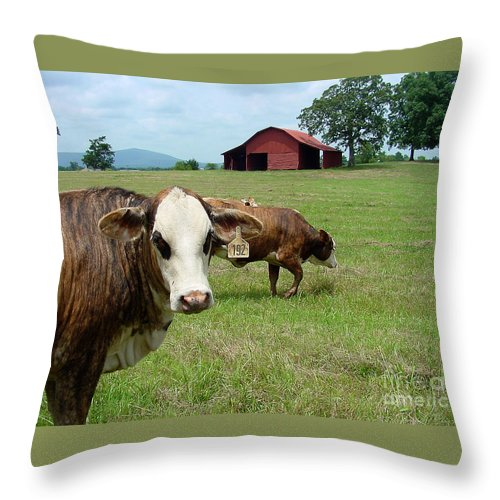 Cow Throw Pillow featuring the photograph Cows8986 by Gary Gingrich Galleries