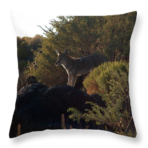 Coyote Throw Pillow featuring the photograph Coyote At The Petrogyphs 2 by Tim McCarthy