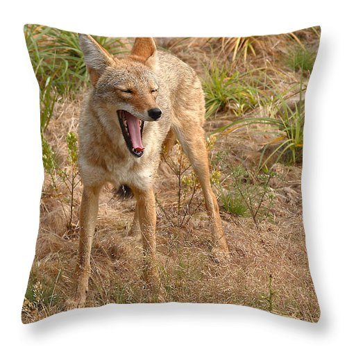 Coyote Throw Pillow featuring the photograph Coyote Caught In A Yawn by Max Allen