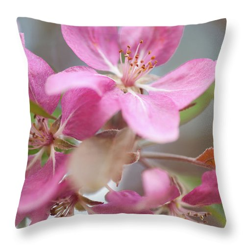 Jenny Rainbow Fine Art Photography Throw Pillow featuring the photograph Crabapple Tree Pink Flowers by Jenny Rainbow