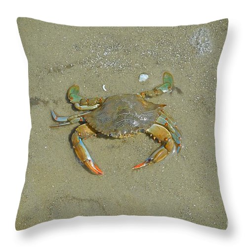 Crab Throw Pillow featuring the photograph Crabby by Linda Covino