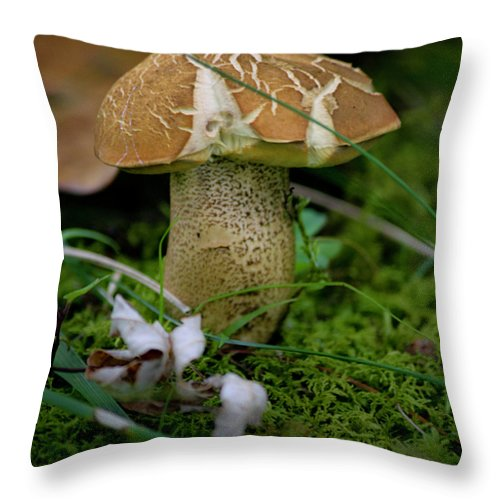 Fungus Throw Pillow featuring the photograph Crackles by Teresa Mucha