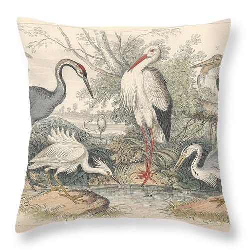 Antique Prints Throw Pillow featuring the drawing Cranes by Dreyer Wildlife Print Collections