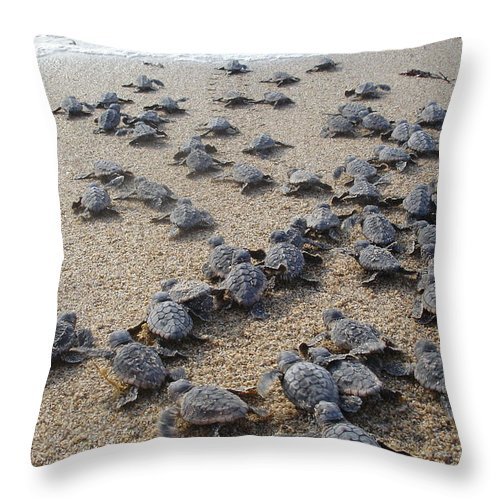 Sea Turtle Throw Pillow featuring the photograph Crawl To The Ocean by Mary Wozny
