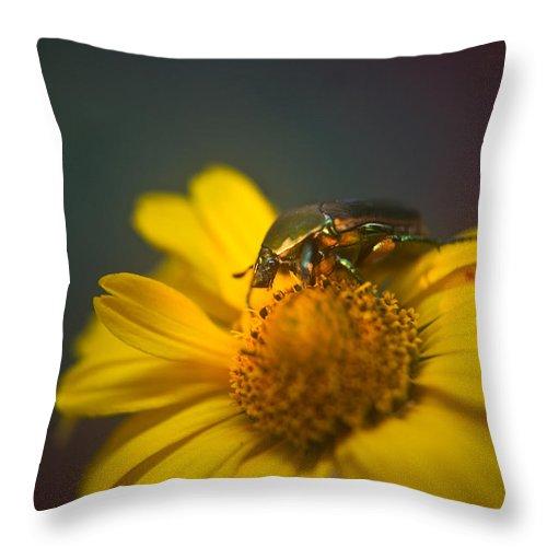 June Throw Pillow featuring the photograph Crawling June Beetle by Douglas Barnett