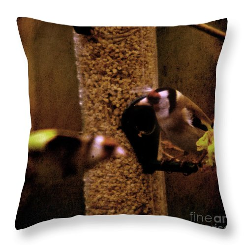Feeder Throw Pillow featuring the photograph Crazy Goldfinch by Angel Ciesniarska