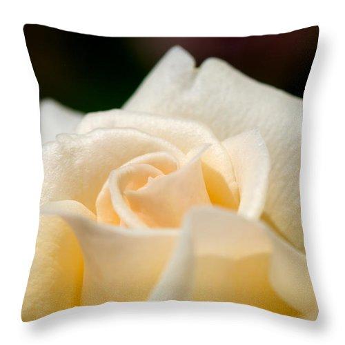 Lisa Knechtel Throw Pillow featuring the photograph Cream Rose Kisses by Lisa Knechtel