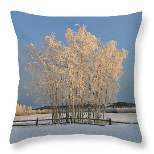 Snow Throw Pillow featuring the photograph Creamer Field by Louise Magno