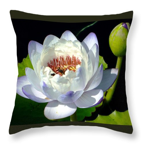 Water Lilly Throw Pillow featuring the photograph Creation by Brenda Pressnall