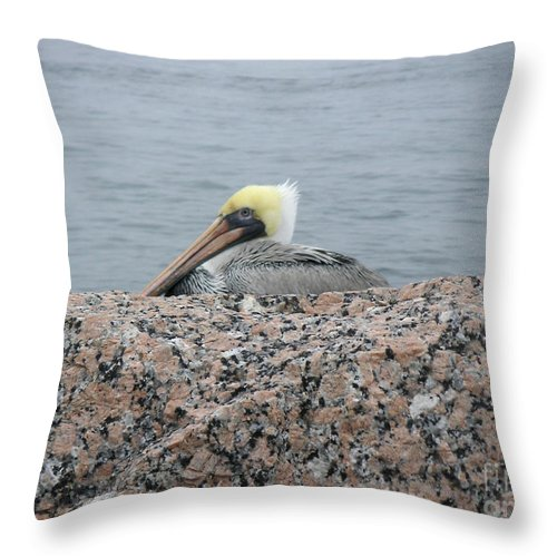 Nature Throw Pillow featuring the photograph Creatures Of The Gulf - Hiding Out by Lucyna A M Green