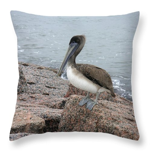 Nature Throw Pillow featuring the photograph Creatures Of The Gulf - His Best Side by Lucyna A M Green