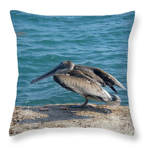 Nature Throw Pillow featuring the photograph Creatures Of The Gulf - Scratch N' Sniff by Lucyna A M Green