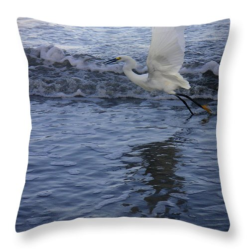 Nature Throw Pillow featuring the photograph Creatures Of The Gulf - Take Off At Dusk by Lucyna A M Green