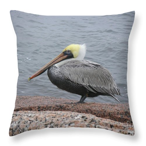 Nature Throw Pillow featuring the photograph Creatures Of The Gulf - The Squatter by Lucyna A M Green