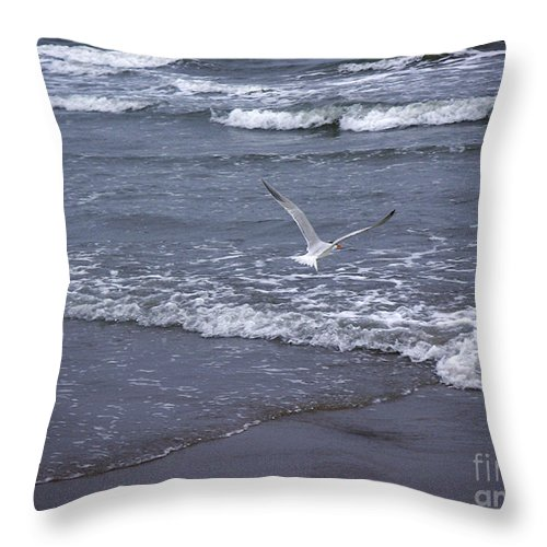 Nature Throw Pillow featuring the photograph Creatures Of The Gulf - Tranquility by Lucyna A M Green