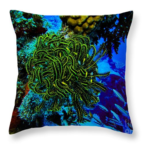 Coral Throw Pillow featuring the photograph Crinoid On Wrecked Plane In Kwajalein by Dan Norton