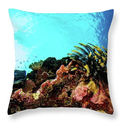Sharks Throw Pillow featuring the photograph Crinoid Silhouette by Dan Norton