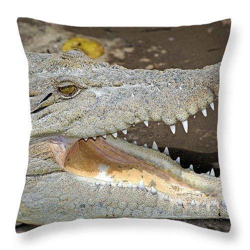 Crocodile Throw Pillow featuring the photograph Crocodile Rock by Kenneth Albin